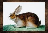 rabbit edited.jpg