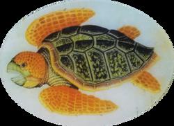 Orange Sea Turtle R-16