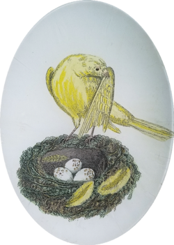 The Canary with Nest O-134