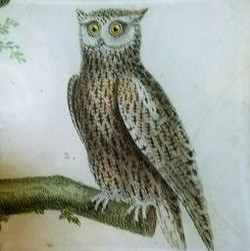 Single French Owl #2 O-169