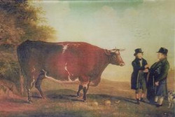 Cow with Two Men A-41