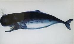 Dark Blue Whale A-281