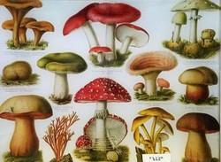 FL-738 Red Mushroom Study