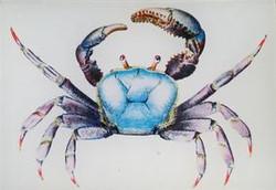 Blue Crab S-151