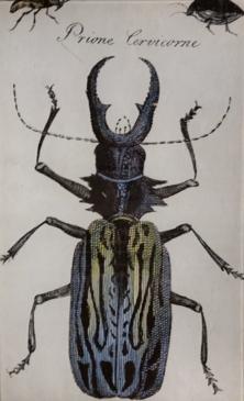 Black Beetle B-33
