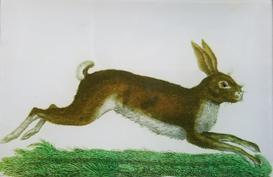Running Bunny A-57