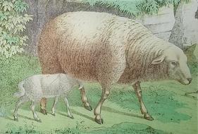 Ewe and Lamb A-30