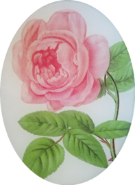 Cenna Pink Rose FL-269