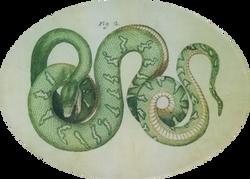 Green Snake #2 R-21