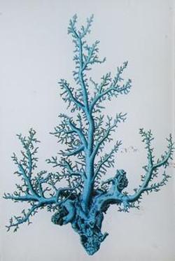 Robin Egg Blue  Coral #10 S-450