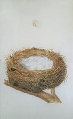 Nest #4 O-356