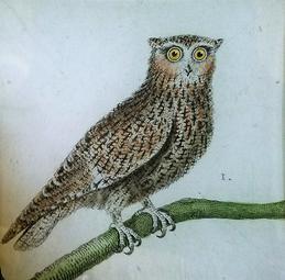 Single French Owl #1 O-168