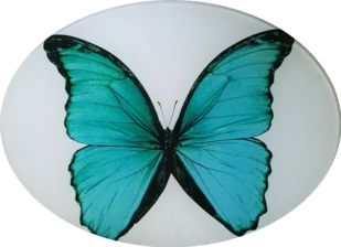 Turquoise Butterfly B-130