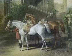 2 Royal Horses H-151