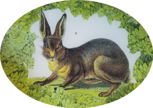 Woodland Brown Rabbit W-14