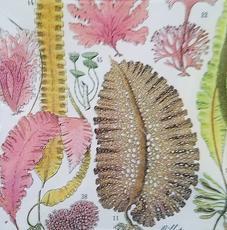 Seaweed Study #14 S-111