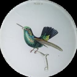 Hummingbird Plate 8 O-137