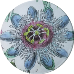 Blue and Pink Passion Flower FL 313