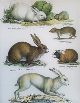 Hare Study A-283