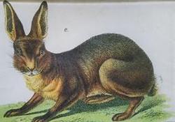 Bunny Flg. E A-123