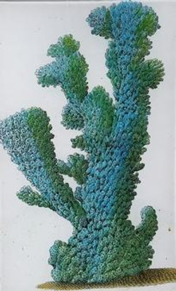 Large Blue Coral 1730 S-95