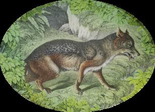 Woodland Wolf W-5