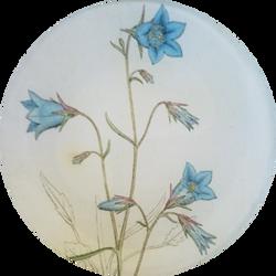 Blue Bellflower FL-272