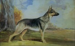 Geraloo's Geisha (German Shepherd) C