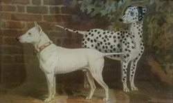 White Dog and Dalmatian C-3