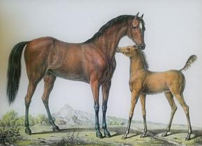 Arabian Mother and Foal H-126