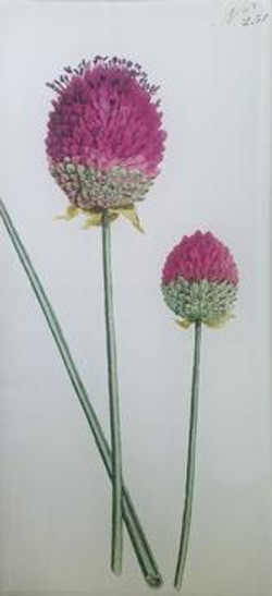 Curtis Purple Flower #251 FL 314