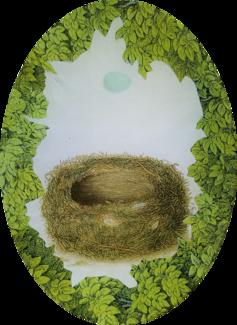 Woodland Nest with Blue Egg W-16