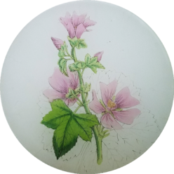 Common Mallow FL 316