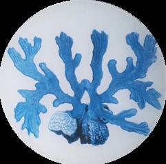 Blue Sea Coral S-229