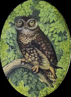 Woodland Night Owl W-19
