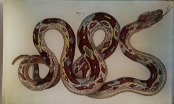 Brown & Yellow Snake  R-24