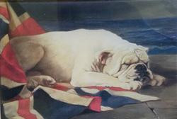 Churchill English Bulldog C-426