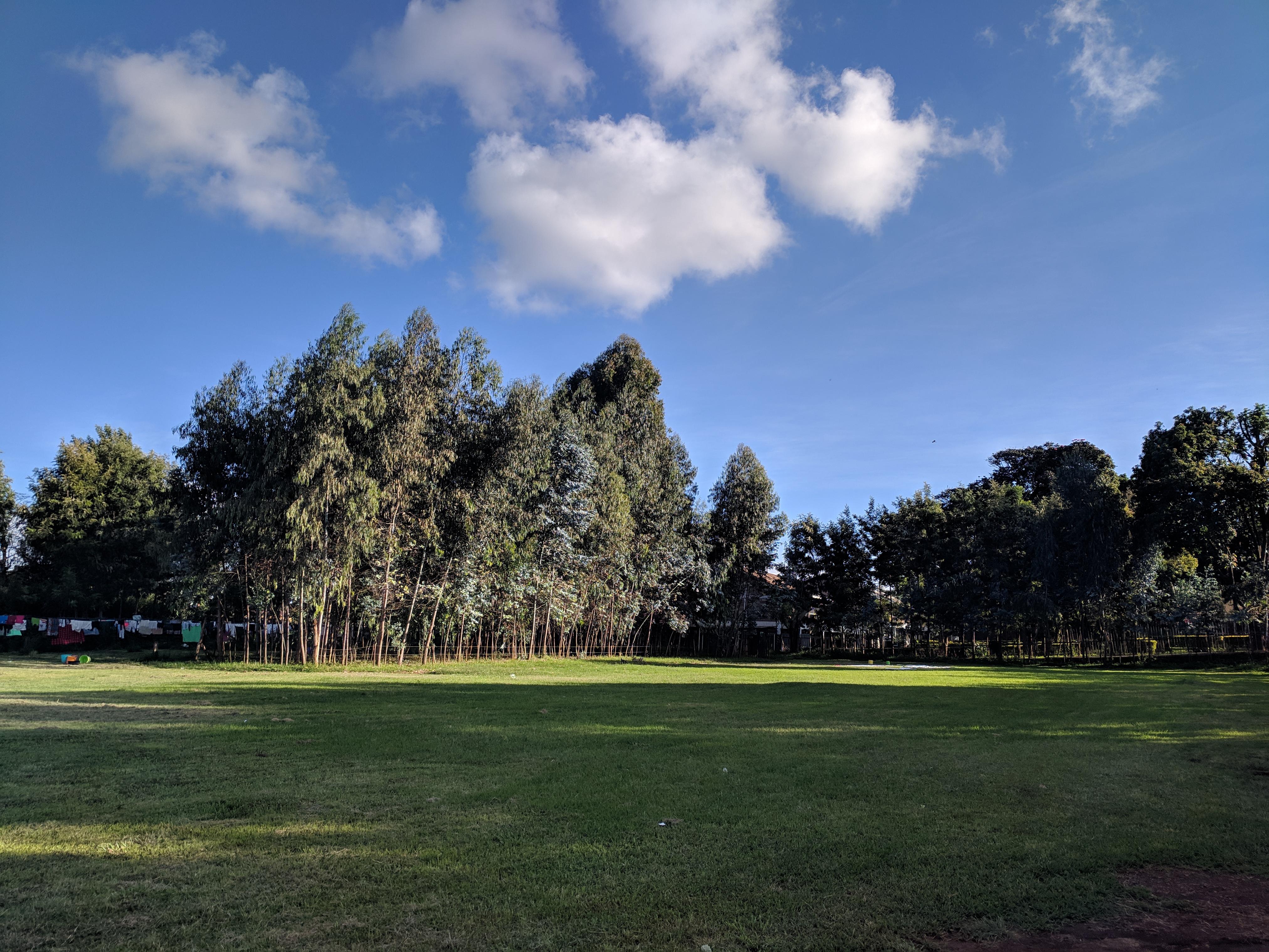 Field jpg