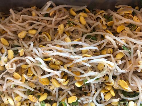 Kong Namul 콩나물무침
