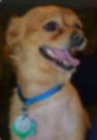 rosco.png