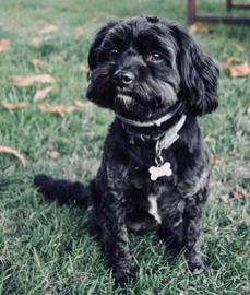 Black dog called Charlie