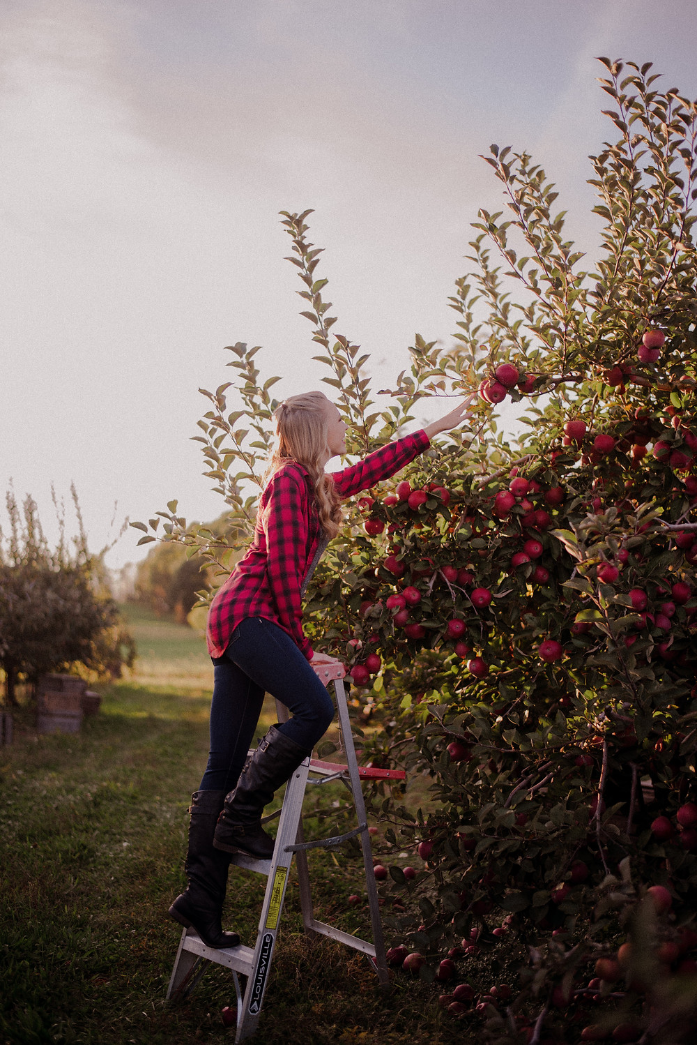 apple orchard photo session with ladder