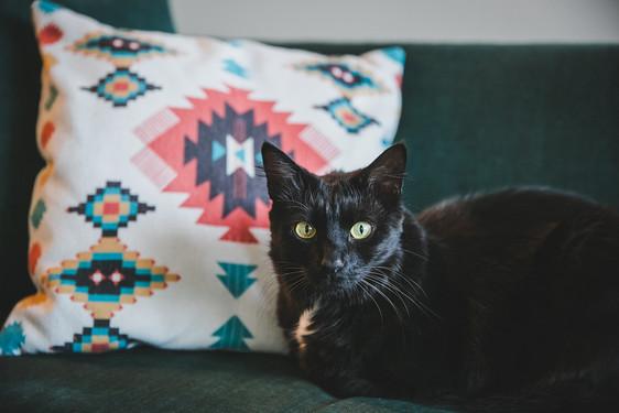 סלון_6_חתולה_עם_כרית.jpg