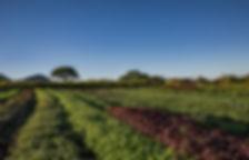 Kahumana Organi Farms and Cafe West Oahu Farm Tour Colorful Salad Fields