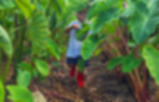 Farm to Table Tours and Field Trips Oahu at Kahumana
