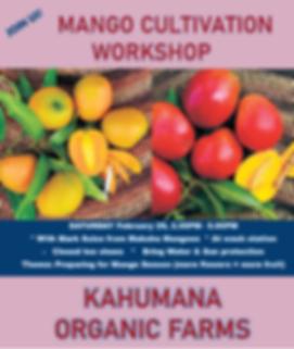 Mango Workshop.png