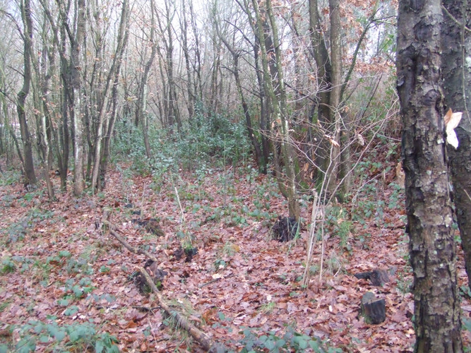 Bosque Albite