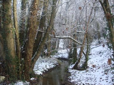 Bosque y río Albite