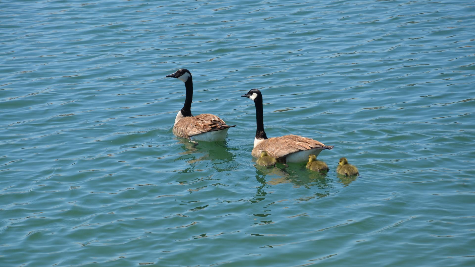 2015 Quail Lake (17).JPG