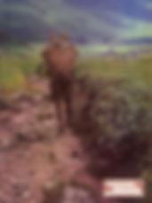1978 Catalog COVER-1.jpg
